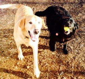 Rocky and Zeus.