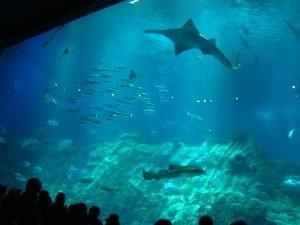 hong-kong-ocean-park-aquarium.