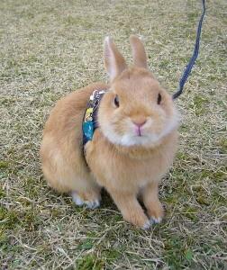 p1180824-bunny-on-a-leash-photomodel.